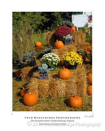 Pumpkin Patch, Fredericksburg, Virginia